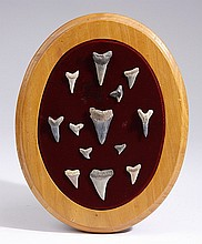 Mounted display of thirteen shark's teeth