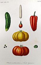 (Botanique) - REVEIL, Oscar; GÉRARD, François; DUPUIS, Aristide; HÉRINCQ F.