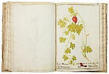 Erbario manoscritto. Seconda metà del XVII secolo.