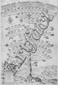 Ammirato Scipione - Tre alberi genealogici