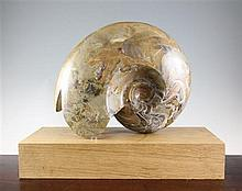 A large polished goniatite specimen fossil, Devonian period (300-400 million years),