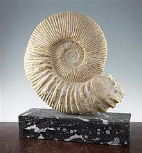 A large ammonite specimen, overall 22in.