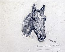 Lucy Kemp-Welch (1869-1958) Study of a horse 'Toby', 6.75 x 8.5in.