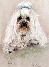 Marjorie Cox (20th C.) Portrait of a white poodle 'Lily', 14 x 10.5in.