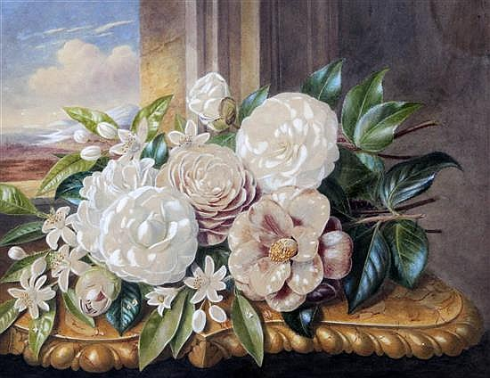 Augusta Innes Withers (1792-1877) Still life of camellias, 12.5 x 16in.