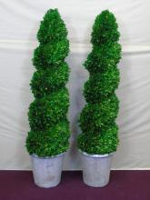 2 Custom Preserved English Boxwood Topiary Trees