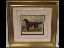 19th Century Color Engraving of an Irish Setter