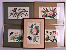 CHINESE SCHOOL (19TH CENTURY) A SET OF FIVE FRAMED PITH PAPER WORKS depicting insects amongst bold foliage. Each 10.5ins x 6.5ins.