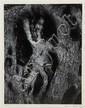 Aaron Siskind, (American, 1903-1991), Olive Tree, Corfu 33, 1970