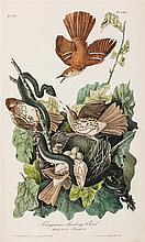 AUDUBON, JOHN JAMES. The Birds of America... NY & Philadelphia, [1839], 1840-1844. 7 vols. First octavo ed. Complete.