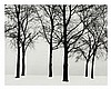 Harry Callahan, (American, 1912-1999), Chicago (trees in snow), 1950