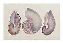 La Roche Laffitte, (French, b. 1943), Shells and Marine Life Studies (four works)