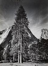 * Ansel Adams, (American, 1902-1984), Trees and Cliffs, Yosemite Valley,