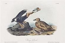 Audubon, John James, after Each approximately: 10 1/2 x 6 3/4 inches.