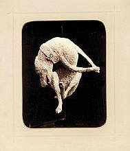 Konvolut von 6 Fotographien 2. H. 19. Jh., drei Aufnahmen von Grabungsfunden aus Pompeji, darunter der Hund und der Mann, die von der heißen Asche überrascht und konserviert wurden, sowie Aufnahmen aus Herculaneum und Paestum, hinter Pp. bzw. auf