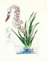 Salvador Dali (1904-1989), Polyanthes Tuberosa Cycnus Vegeralis, aus der Folge der Fleurs Surrealiste, Kaltnadel über Heliogravure von 1972, u. re. handsign., u. li. num. 55/350, Blattmaße 74 x 56 cm