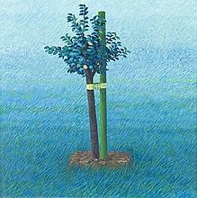 Peter Graemer (*1939), in Chemnitz geborener, zeitgenössischer Maler, studierte von 1957 bis 1960 an der Fachschule für angewandte Kunst in Potsdam und von 1960 bis 1966 an der Hochschule für Bildende Kunst in Berlin, Wiese mit frisch gesetztem