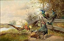 Max Hänger (1874-1941), Münchener Tiermaler, Truthahn, Pfauen und Fasane am