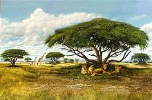Alexander Thiele (*1924), Löwen unter einem Baum in der Savanne mit Zebras
