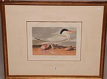JOHN JAMES AUDUBON (American, 1785-1851)  color Engraving,
