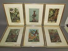Set of 12 chromolithographs