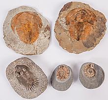 A trio of visually attractive Fossils