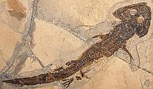 280 Million Year Old Amphibian With Skin