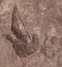 Pair Of Dinosaur Footprints