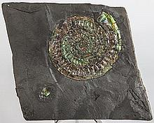 Green Iridescent Ammonite