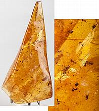 Huge Amber Slab With Insects