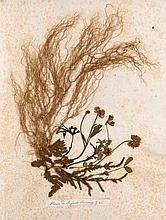 Herbarium aus der Sammlung des Fürsten Jonas von Wrede aus Mondsee. - Mit 46 Blumen und Pflanzen. Blauer Lwd. mit Goldprägung. (minimal berieben u. bestoßen.)