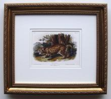 Audubon Quadruped Plate 101 Jaquar Framed