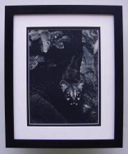 Brassai The Hunt photogravure framed