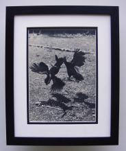 Elizabeth Hibbs Birds Fighting photogravure