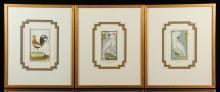 Martinet, Birds, 3 Colored Prints