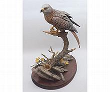"Border Fine Arts model ""Red Kite"", number BO794, raised on a wooden plinth base, 15"" high"