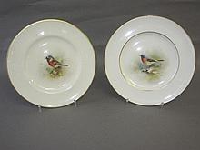 Pair signed Royal Worcester porcelain bird plates,