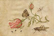KESSEL, JAN VAN d. Ä. (1626 Antwerpen 1679)