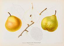 BOTANIK - Pomologie - Schweizer Obstsorten.