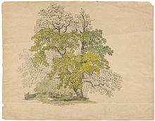 SALATHÉ, FRIEDRICH (Binningen 1793 - 1858 Paris). Study of trees,