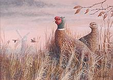 Mark Chester - Pheasants at Billingford, acrylic,