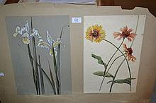 Harold Moorcroft (brother of William), two watercolour botanical studies mounted on a single card, irises and daisies, one signed with monogram, both bearing E.S.K. embossed stamp, 15ins x 10ins, the margin bearing an original paper label with