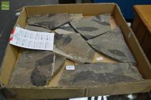 Box Genuine Fossils + Identifier