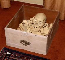 A Partial Human Skeleton,