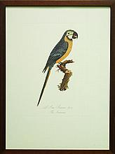 A 19th Century French lithograph depicting a Parrot, ed.43/200, 35 x 26cm