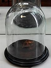 Glass Dome On Timber Base