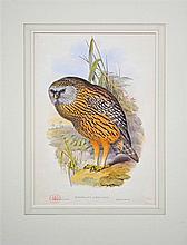 John Gould & H.C.Richter (XIX) After. - Collection of (10) Bird Illustrations each 36 x 54.5cm