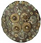 Antique Indian Shield