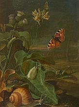 Johann Adalbert Angermayer, Still Life with Plants and Insects