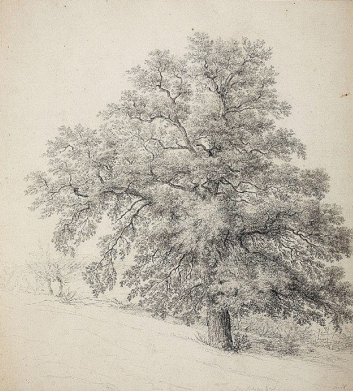 ANTON RADL, TREE STUDY, Pencil, mounted, 53 x 48 cm